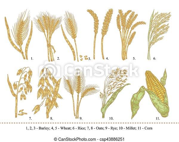 BÁT: olcsóbb lett a búza és a kukorica - vargaspecial.hu